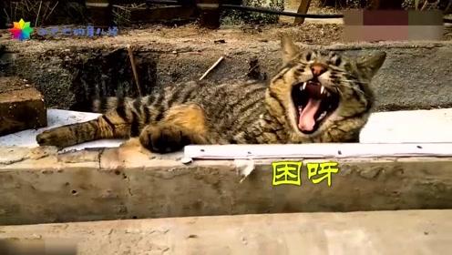 狸花猫:太阳照得舒服,我就先睡了