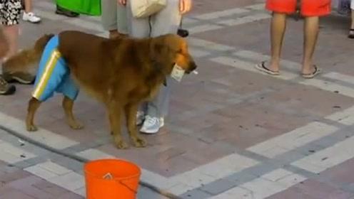 狗狗一天的收入够买好几包狗粮了,陪着主人一起卖艺