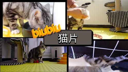 猫片系列:猫的一天到底在忙什么