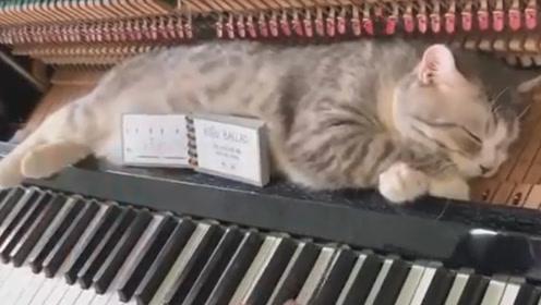 主人弹钢琴,猫咪躺在钢琴上一动不动,样子萌爆了!