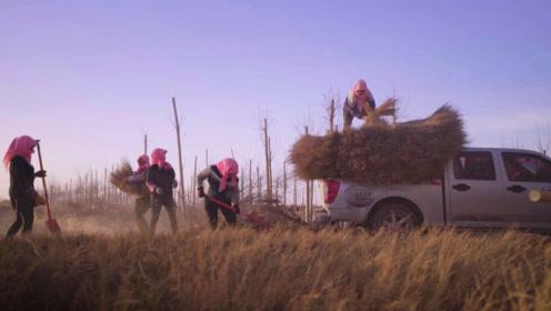 留守妇女组大妈治沙队,在沙漠种梭梭树,誓言把沙子赶走