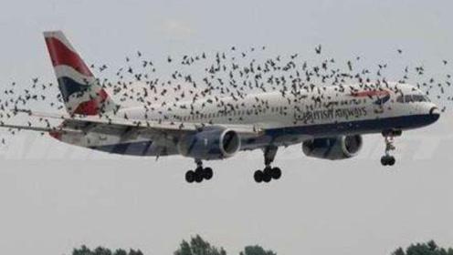 鸟儿撞上了天上的飞机,后果居然这么严重?