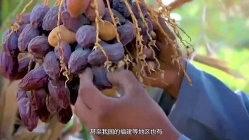 迪拜土豪最喜欢吃的水果,富含丰富的营养价值,你敢尝试吗?