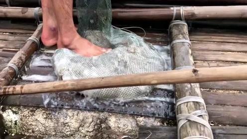 渔民捕到巨型海蜇,把它分割后这样处理,看完你还敢吃吗?
