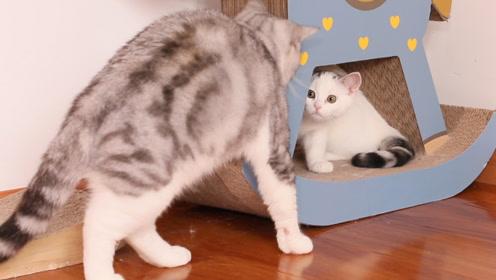 猫爸爸偷摸女儿尾巴,被女儿凶到没脾气,简直是猫中宠女狂魔