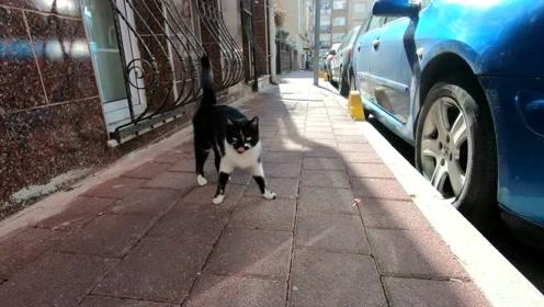饥饿的流浪猫,想吃食物又怕受人类伤害,小心翼翼的样子令人心疼