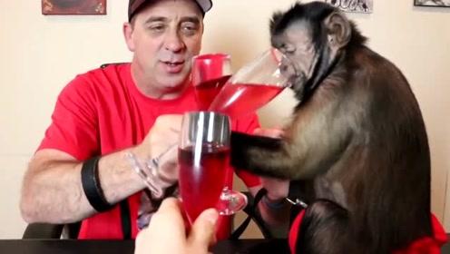 逆天了,猴子拿啤酒和主人对饮,动作十分娴熟