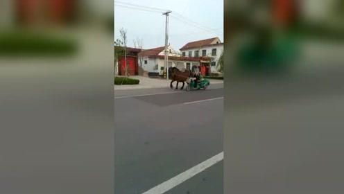 大爷的小马,真的是太可爱了!