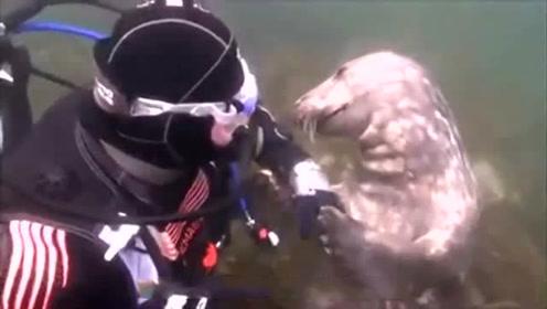 男子潜水意外遇到只海豹,一直拉着他的手,直到海豹往后一躺才懂
