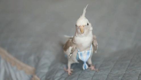 """小鸟穿上""""纸尿裤"""",95后女孩脑洞大开,研发小鸟专用纸尿裤"""