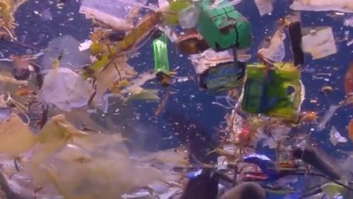 塑料垃圾有救了?有生物能吃塑料,减轻海洋的污染