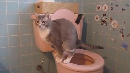 自己站马桶上方便,这些猫都成精了,真是不可思议!