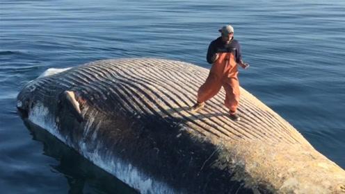 """男子作死跳上鲸鱼尸体""""跳舞"""",拍完照后,却不肯离开?"""