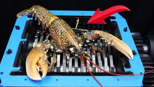 老外疯狂实验:将巨型龙虾放在粉碎机里,结果令我无语