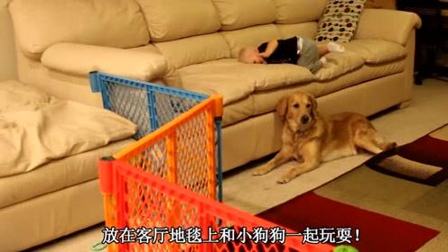 宝宝在地毯上和狗狗玩,爸妈笑趴了,宝宝客厅和狗狗玩耍