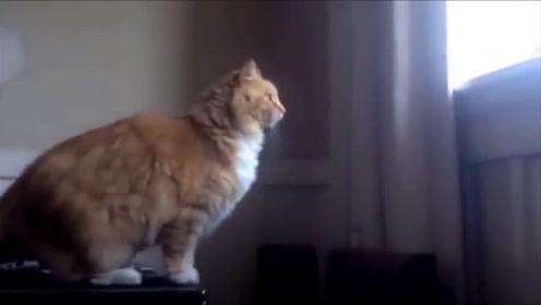 橘猫本想跳上窗台 结果脚一滑摔成了狗吃屎!