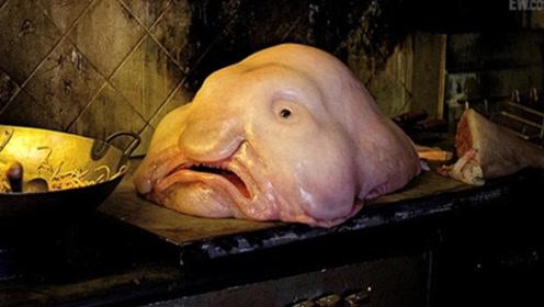 世上长相最丑的四种动物,没有最丑只有更丑!简直是丑哭了!