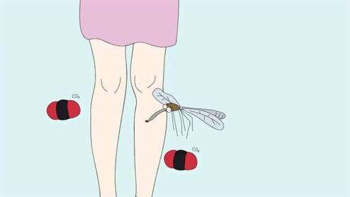有的人夏天为什么爱招蚊子,是因为血型的缘故吗?这才是真相