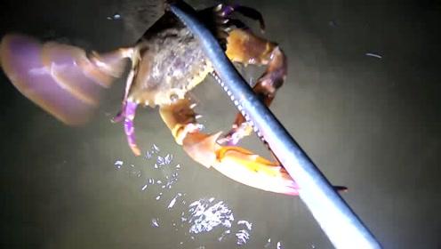 水下面的螃蟹在打架,小志发现了就过来劝架,它俩又要倒霉了