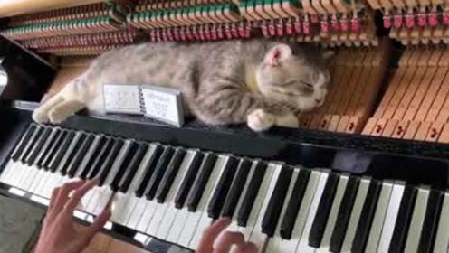 猫咪睡在钢琴上,主人本想吓唬它,下一秒原谅我不厚道的笑了!