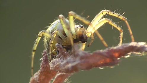 用长焦给蜘蛛拍个艺术照,好美呀!
