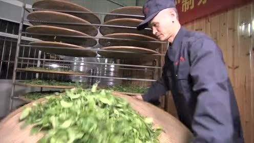福建武夷:茶乡茶香 匠人匠心