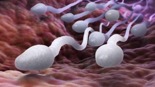 避孕药是如何起作用的?3D动画演示全过程,看完心疼不已!