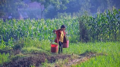 明明有种植化肥,农民种菜却用粪水浇灌,被粪水浇过的菜能吃吗?