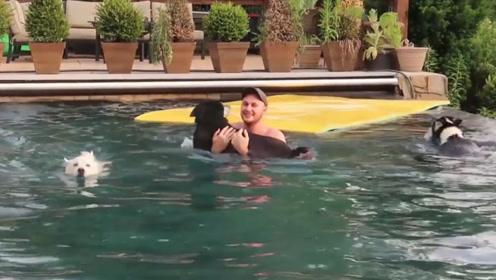 主人掉下水的那一刻,哈士奇竟是第一个跳下去救人的,太意外了