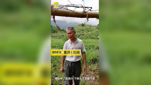 雨雨雨!重庆7月好凉快,农民伯伯却愁哭:庄稼都泡坏了