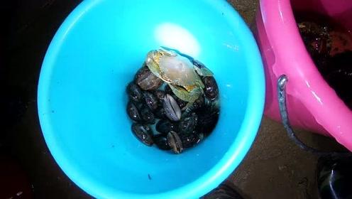 小志今晚带几个粉丝赶海,来这里捡海胆和猪仔螺,收获还不错