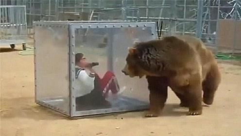 女子在玻璃箱拍棕熊,刚开始拍棕熊就发火了,画面不敢想象