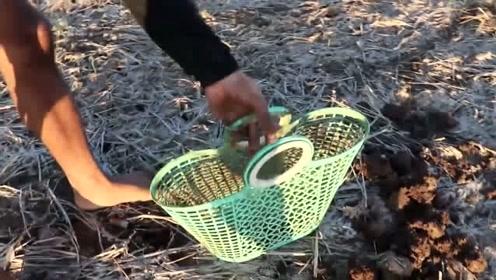 奇葩!这里的村民想要吃鱼,直接带上锄头去地里挖