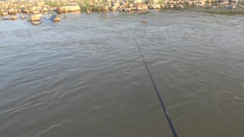 钓鱼:大水退去,急水流上白条成群,扔里几秒就来口啊!