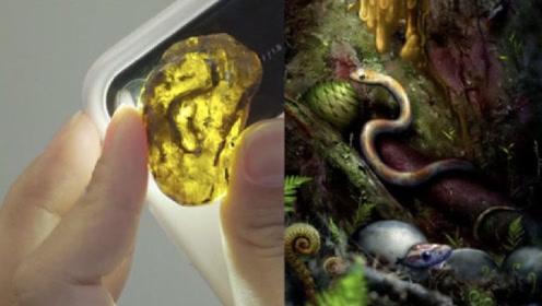 9000万年前的琥珀内,到底隐藏什么物体?看到生物令人尖叫!