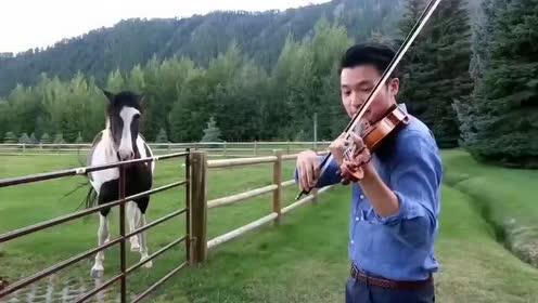 帅哥拉小提琴,老马点头称赞