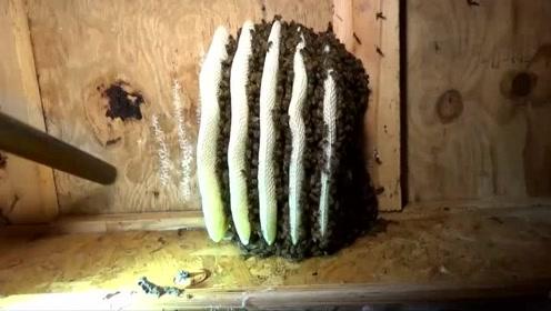 脑洞太大了,老外用吸尘器收割蜂蜜,效果喜人