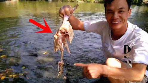 男子将一只死鸡放进食人鱼河中,3秒后水中瞬间炸开了窝!
