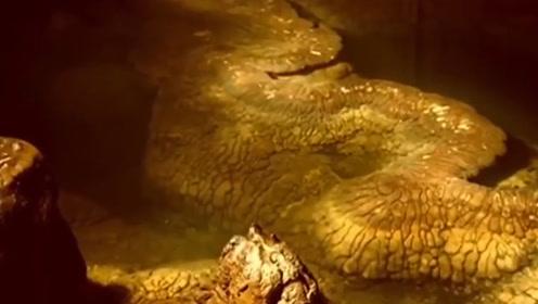 """湖南一山洞发现""""真龙""""遗迹 全身金黄总长13米"""