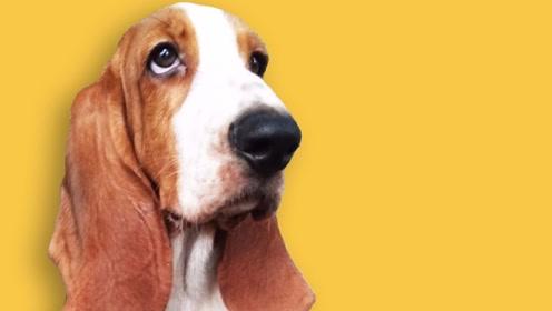 狗狗:笨蛋主人总以为我在发脾气,那是撒娇啊
