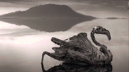 世界上杀伤力最大的湖泊:颜色呈血红色,生物进入就被石化!