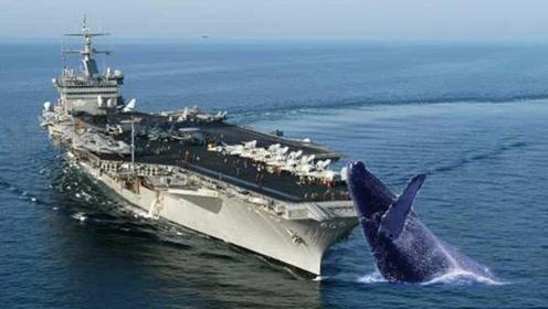 航母螺旋桨有多可怕?看这些海洋生物的遭遇,就知道了!