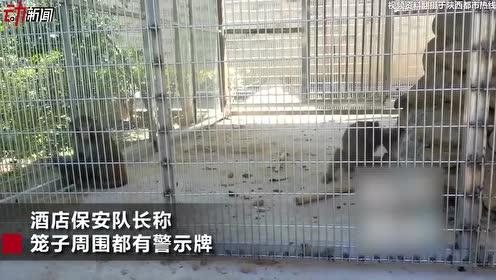 2岁女童被酒店猴子咬伤手指 林业局:非法饲养暂扣猴子