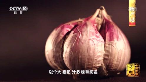 中国影像方志丨这种紫皮大蒜汁多味辣,蒜素是普通大蒜5倍