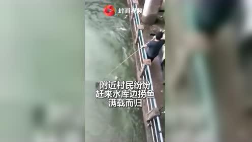 壮观!吉林四平水库泄洪天上下飞鱼  村民下河捕捞满载而归