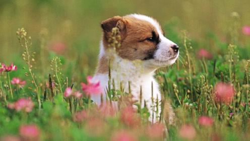 那些说人话的狗狗!可爱动物学舌系列!你听懂了嘛?