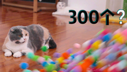给猫买了三百个玩具小球 以为猫咪会兴奋到蹦迪