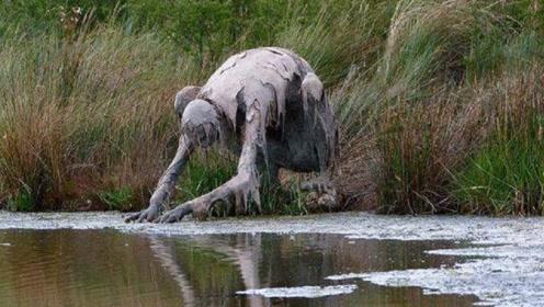 """女子河边散步,发现远处有""""奇怪生物""""在喝水,仔细一看却笑了!"""