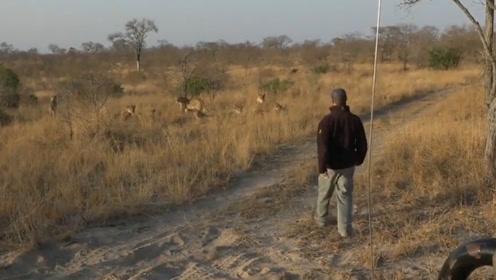 """男子追踪野兽足迹 遭遇狮群""""死亡凝视""""吓得连连后退"""
