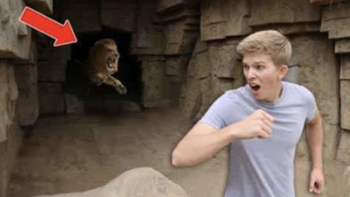 世界上最恐怖的动物园,进去要签生死合同,游客会不会两腿发软